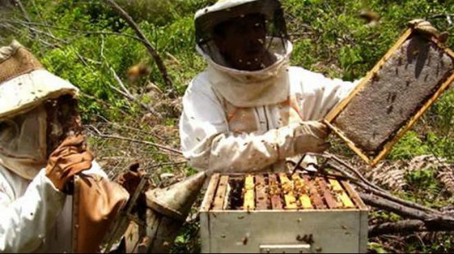 Buscan impulsar desarrollo, producción y comercialización de miel, polen y otros derivados